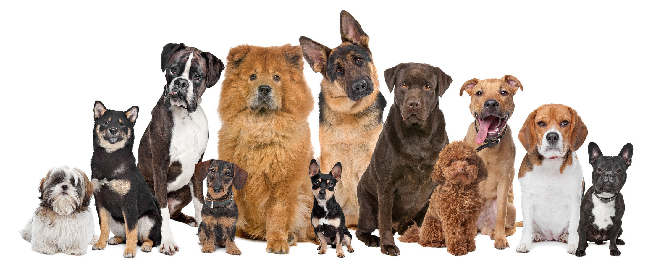 group-of-12-dogs_9889235_m.jpg