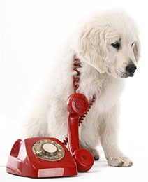 white-dog-phone.jpg